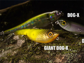Megabass  DOG-X Jr. COAYU
